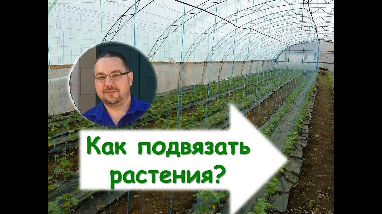 Подвязка <b>растений</b> в теплице. Как <b>подвязать растения</b>? Шпалера