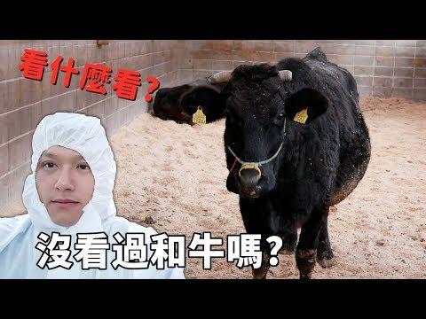 參觀神秘和牛牧場-碰巧發現剛出生的牛寶寶~飛驒牛的故鄉☆哪哪麻☆