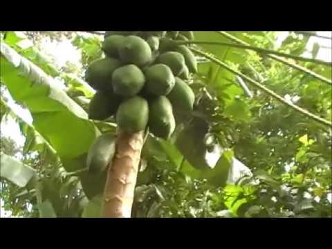 Livingstone Tanzania Trust sponsors Teresia