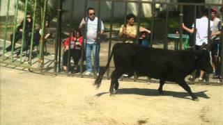 journee au fer a cheval manade du gardon 17 04 2011 .wmv