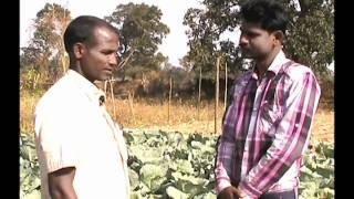 Cabbage Cultivation -  A Success Story Odia Varrat Odisha