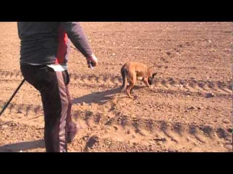 Ginger  1st Track On Dirt