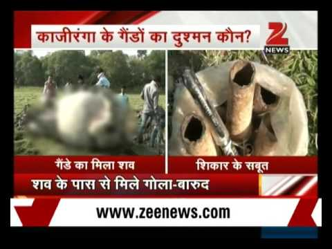 Two rhinos poached in two days in Kaziranga National Park