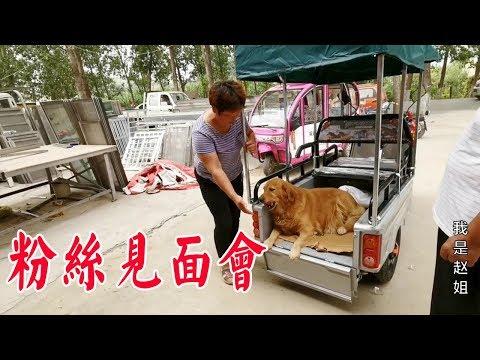 媽媽帶毛孩子買三輪車,狗狗向老闆展示啥技能,員工看了爭相拍照【我是趙姐】