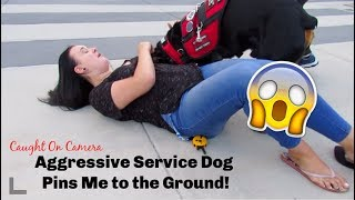 AGGRESSIVE SERVICE DOG PINS ME DOWN!!!