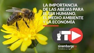 La importancia de las abejas para el ser humano, el medio ambiente y la economía