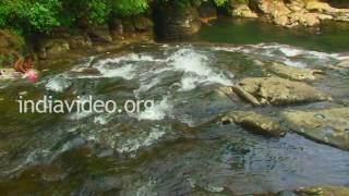 Root Bridge, Cherrapunji, Meghalaya, Shillong