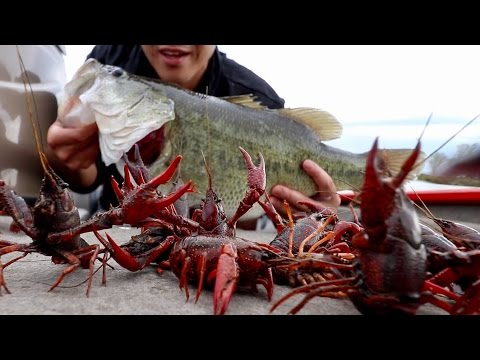 """Catching GINORMOUS Bass on RED Crawfish!!! Loser gets a """"Cajun Craw Earring"""" (FISHING CHALLENGE)"""