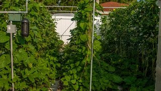 How To Build A Trellis Structure For Vegetable Garden