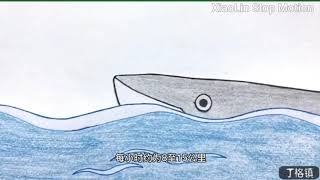 Cool humpback whale cold popul…