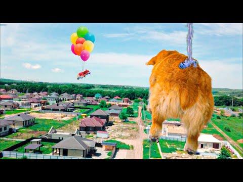 ШОК!! Летающий КОРГИ на воздушных шариках!! (Корги Коржик) Говорящая собака