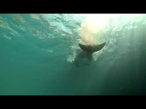 Рождение дельфиненка август 2016