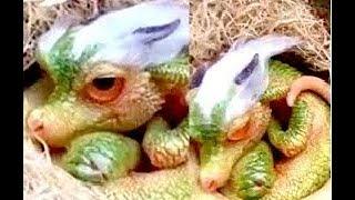 مخلوقات اسطورية موجودة في الحياة الحقيقية