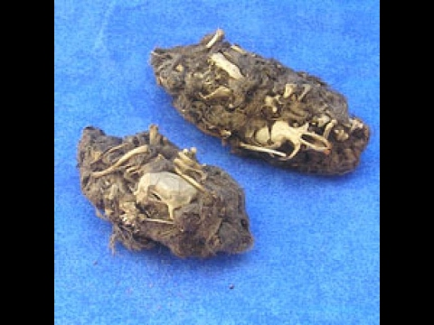 Something you need to know about owl pellets