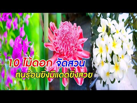10 ไม้ดอกจัดสวนทนร้อนยิ่งมีแดดยิ่งสวย