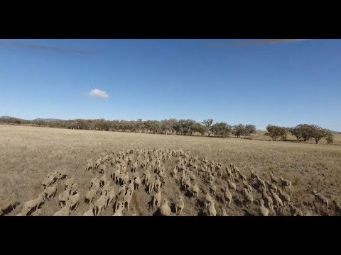 Farmers in New South Wales Suffer from Worst Drought in Decades