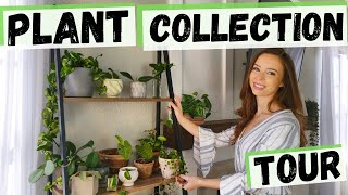 My Houseplant Collection | Fall 2019 Plant Tour