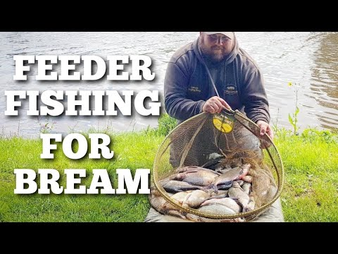 FEEDER FISHING FOR BREAM ON THE RIVER