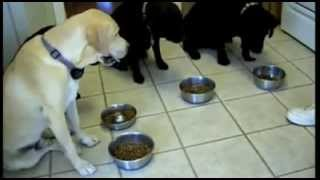 Dogs Praying Before They Eat
