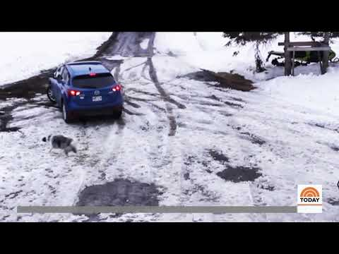 Amazing! Protective pup narrowly saves small dog from car backing up