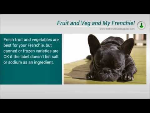 What's The Best Food To Feed My French Bulldog