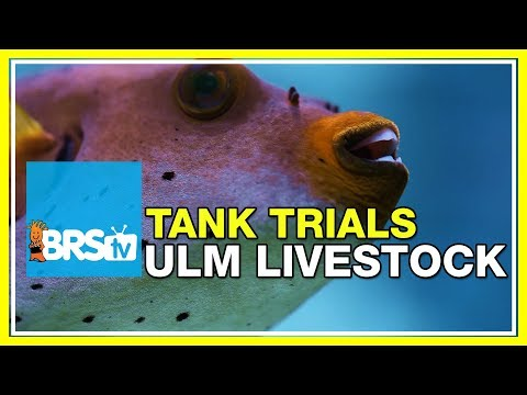 ULM Tank Trials Ep-15: Livestock And Food For Ultra Low Maintenance | BRStv