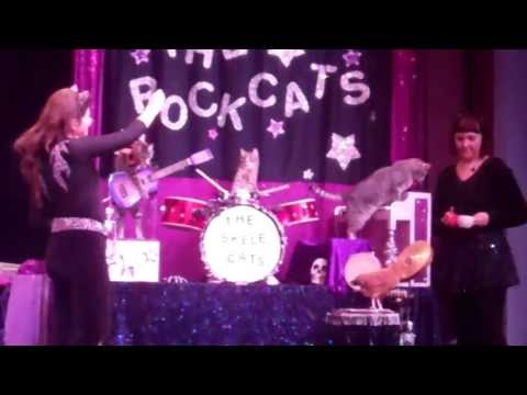 Tuna and the Rock Cats - Fort Worth performance
