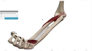 Y ortesis supinación pronación para