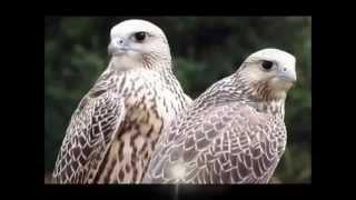 Красная книга Казахстана (птицы).
