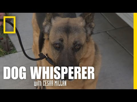 Learning the Leash | Dog Whisperer