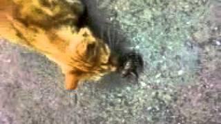 Кот-извращенец