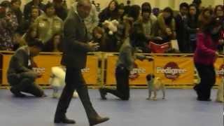 2013 FCI FCI CHIBA INTERNATIONAL DOG SHOW (Toy dog) #2 Shih-Tzu CH/...