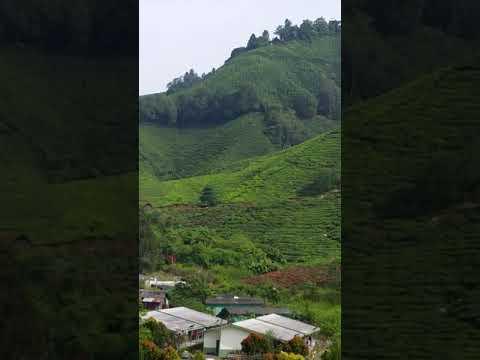 Ladang Teh Boh Sungai Palas Julai 2017 Youtube