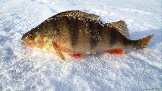 Рыболовный интернет магазин 4River.ru