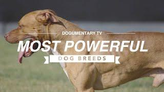 TEN MOST POWERFUL DOG BREEDS
