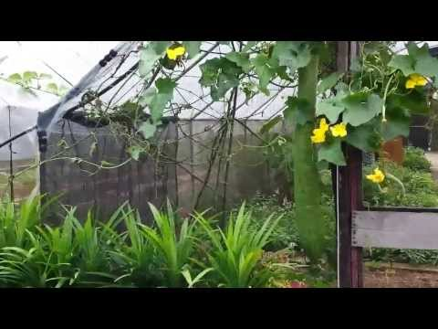 Organic Farming in Singapore. Video 1 of 10