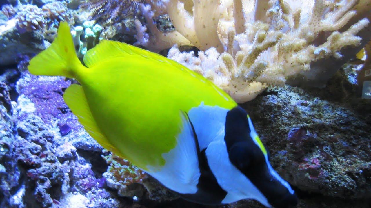 das aquarium wilhelmshaven seeaquarium korallenriff unterwasserwelt north sea aquarium. Black Bedroom Furniture Sets. Home Design Ideas