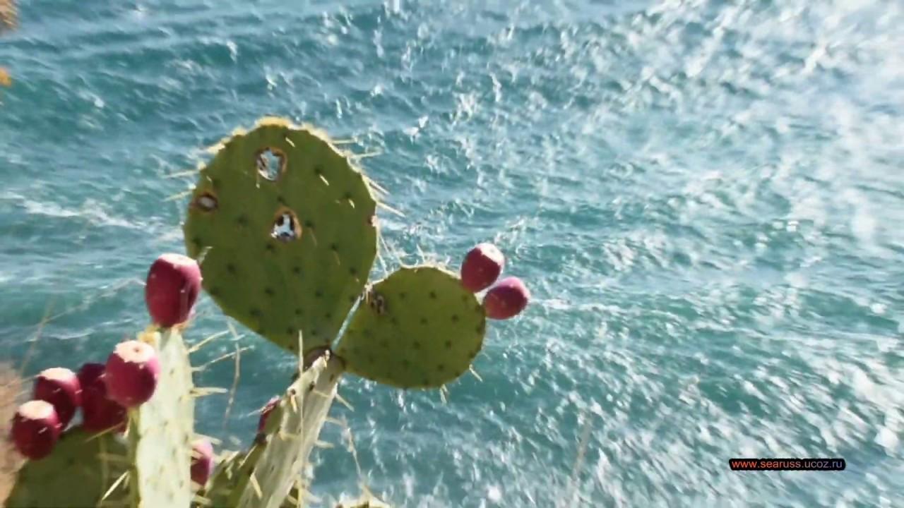 Мисхор, Харакс 1 ноября, 1 шторм, последние осенние цветы. Ялта Крым. Mischor, storm. Yalta Crimea.