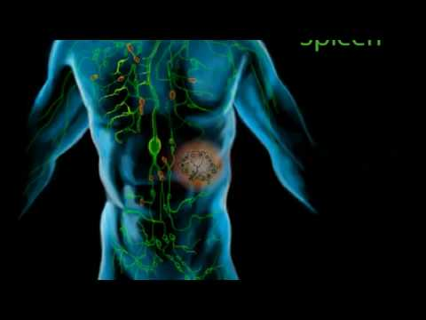 HOW IT WORKS: The Human Lymphatic System
