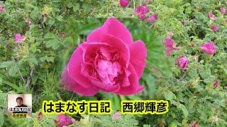 はまなす日記・宴 西郷輝彦.