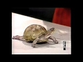 Stupid Pet Tricks on Late Night, March 29, 1984 -newest seri