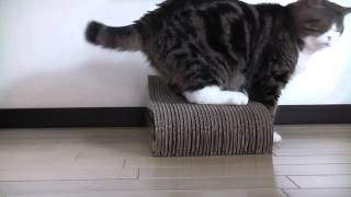 BEST Cat Flap Training