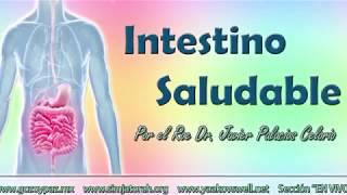 ¿Cómo tener un intestino saludable? por el Roeh Dr. Javier Palacios Celorio - Kehila Gozo y Paz