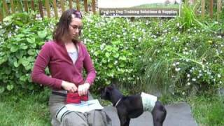 Male Dog Wrap / Belly Band From Pet Expertise Demonstration