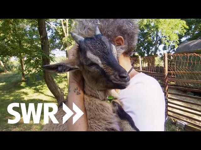 Ein Dressurpferd, eine Wildkatze und ein Ziegenbock | SWR Tierarztgeschichten