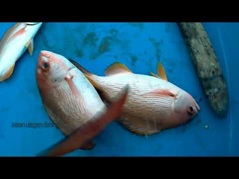 Amazing Life Hacks Fishing With Hook Red Snapper And Queen Fish From Deep Sea