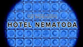 Hotel Nematoda