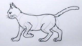 Cara menggambar kucing (How to draw a cat)