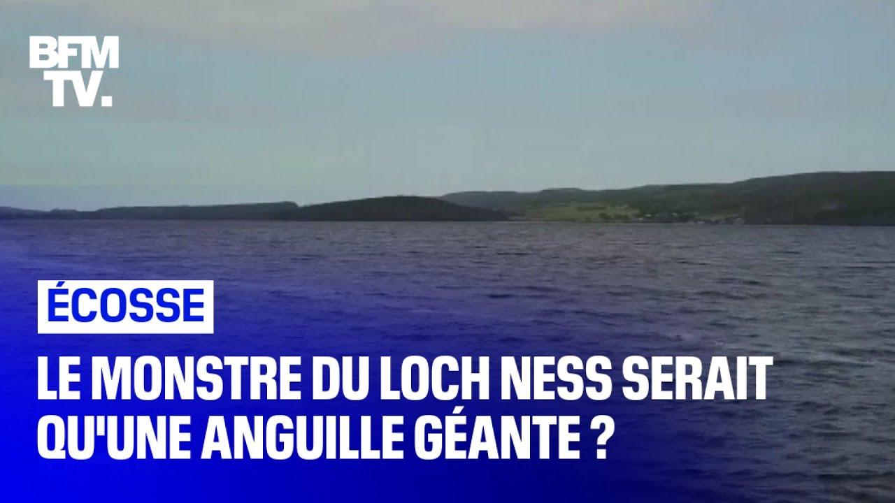 Et Si Le Monstre Du Loch Ness N Etait Qu Une Anguille Geante Youtube