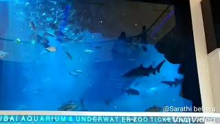 Dubai aquarium & under water zoo,  in dubai mall (u.a.e) Dubai 15/06/2018